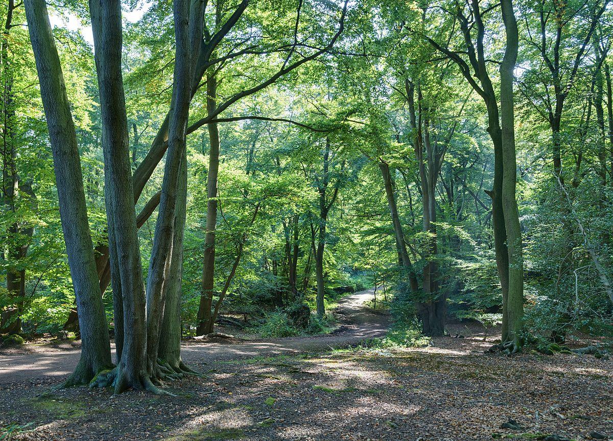 Epping_Forest_Centenary_Walk_2_-_Sept_2008.jpg
