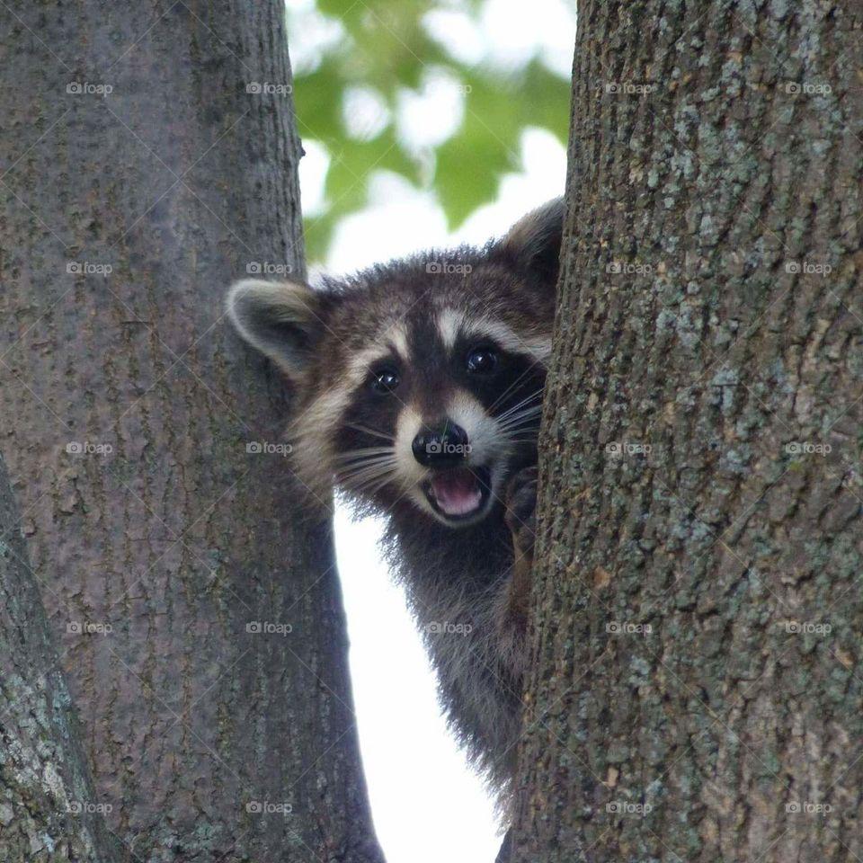 happy-raccoon.jpg
