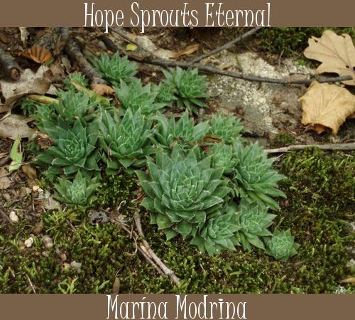 Marína Modrina album cover.png