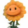 President Sunflower